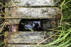 Odbicie fotograf w wodnym inder drewniany most Zdjęcia Royalty Free