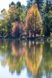 Odbicie jesieni barwioni drzewa Obrazy Stock