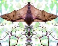 Odbicie lustrzane nietoperz wisząca góra z skrzydłami rozprzestrzeniającymi zdjęcia royalty free