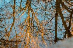 Odbicie nadzy jesieni drzewa zdjęcie royalty free