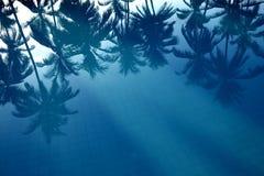 Odbicie palmy w wodzie obraz royalty free