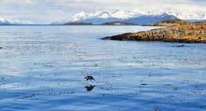 Odbicie ptak w morzu z górami w tle obrazy stock