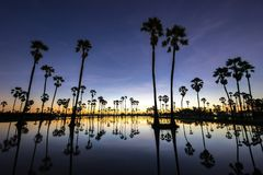 Odbicie sylwetki drzewko palmowe obraz stock