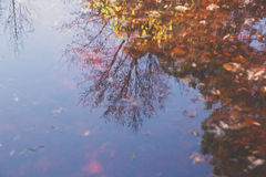 Odbicie w jeziorze Zdjęcia Royalty Free