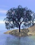 odbicie wydm drzewo piasku. Zdjęcie Stock