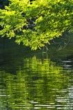 odbicie zielona woda Obraz Royalty Free