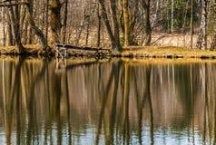 Odbijać na wodnej powierzchni staw Zdjęcie Royalty Free