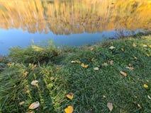 Odbijająca jesień Zdjęcie Stock