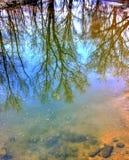 Odbijające widok rzeki, drzewa i zdjęcia royalty free