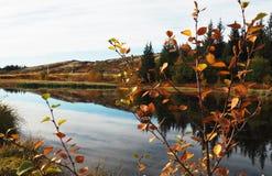 Odbijająca jesieni rzeka obrazy royalty free