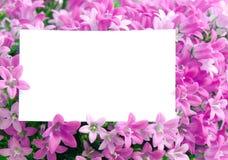 Odbitkowa przestrzeń w kwiatach Zdjęcia Royalty Free