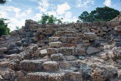Odbudowywająca koral ściana zdjęcie stock