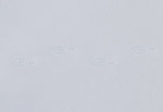 odcisk stopy czasu zimy śniegu Zdjęcie Royalty Free