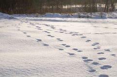 odcisk stopy czasu zimy śniegu Obrazy Stock