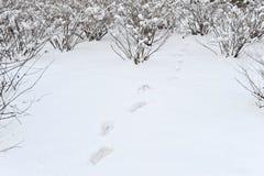 odcisk stopy śnieg Obrazy Stock
