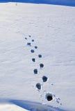 odcisk stopy śnieg Zdjęcia Royalty Free