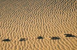 odcisk stopy piasku Zdjęcia Royalty Free