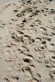 odcisk stopy piasku Obraz Royalty Free