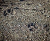 Odcisk stopy zwierzęta. Fotografia Stock
