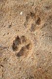 odcisk stopy zwierzęta domowe Obrazy Royalty Free