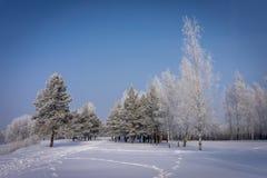 Odciski stopi przez śnieg zakrywającego zimy pola obrazy stock