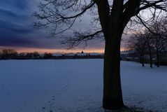 Odciski stopi zimy drzewem fotografia royalty free