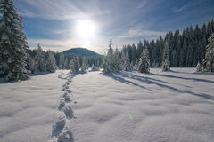 odciski stopy śnieżni zdjęcia stock