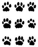 Odciski stopy lwy Obraz Stock