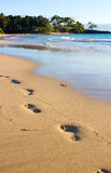 Odciski stopy na mokrym piasku Obraz Stock
