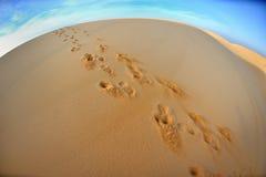 Odciski stopy na piasku zdjęcie royalty free