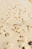 Odciski stopy na piasku Obrazy Royalty Free