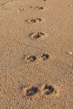 Odciski stopy pies na Sanur plaży, Bali Zdjęcia Royalty Free