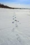 Odciski stopy w śniegu Fotografia Royalty Free