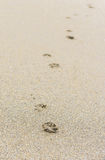 Odciski stopy w piasku na piaskowatej plaży Fotografia Royalty Free