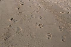 Odciski stopy w piasku na pla?y fotografia royalty free