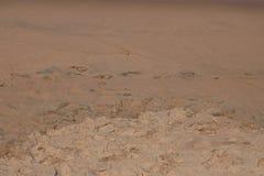ODCISKU STOPY ślad W MOKRYM piasku NA plaży Zdjęcia Royalty Free