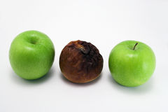Odd apple. Odd one out. Two good apples and a rotten one Royalty Free Stock Photography