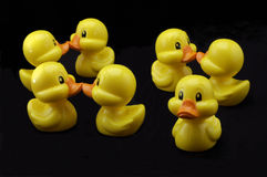 Odd duck out. Three pairs of yellow plastic ducks seem oblivious to a single duck without a partner.  The ducks all sit on a black background Royalty Free Stock Photography