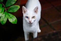 Odd eye white cat. In the garden Stock Images