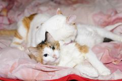 Two cats relaxing royalty free stock photos