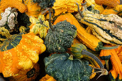 Odd Gourds Fall Harvest Display-Landbouwbedrijftribune stock afbeelding