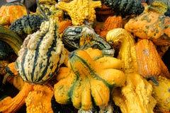 Odd Gourds för allhelgonaafton Royaltyfria Bilder