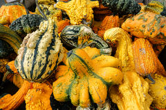 Odd Gourds for Halloween Royalty Free Stock Images