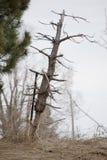 Odd Looking Tree Leaning Over auf dem Gebiet Stockfotografie