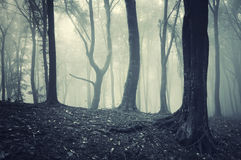 Odd looking tree in light in a foggy mysterious fo Stock Photo