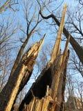 Odd Looking Tree Stump stock afbeelding