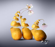 Odd man out. Three pears symbolizing human relations Stock Image