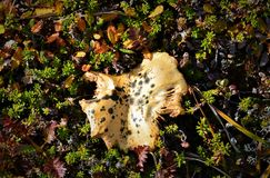 Odd Mushroom i det löst Royaltyfri Bild