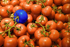 Odd One Out Tomato Photographie stock libre de droits