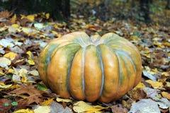 Odd Pumpkin in den Blättern Stockbilder